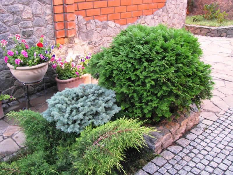 ландшафтные проекты сада с огородом